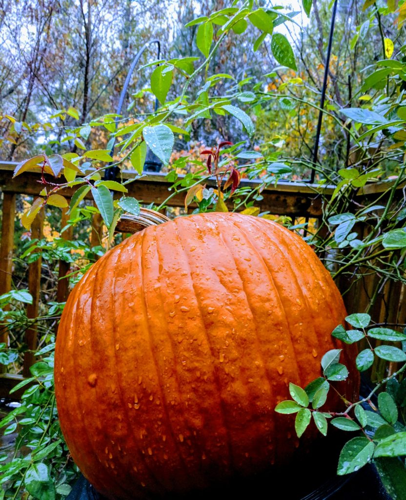 Pumpkin amid leaves